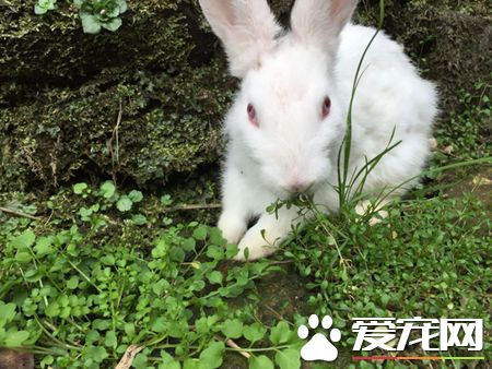 刚生的兔子怎么养 需要做好温度调节