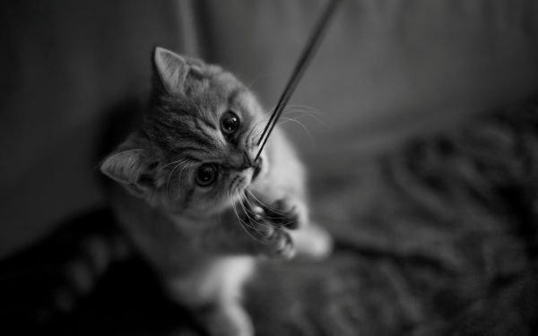 猫讨厌什么气味